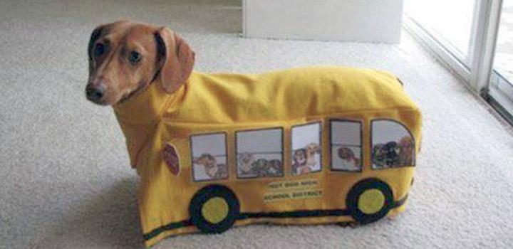 Cachorro viajando de ônibus