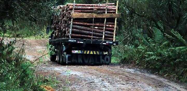 Paraná vai melhorar estradas para escoamento de madeira